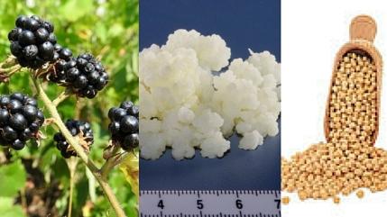 blackberry probiotic natto